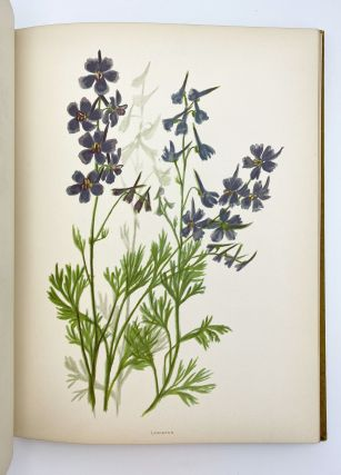 Wild Flowers of the Pacific Coast. From original water color sketches drawn from nature