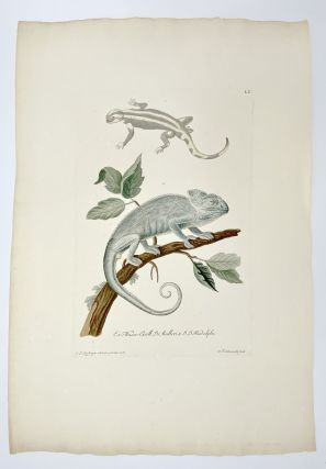 Lizards]. Plate LV from: Deliciae Naturae Selectae Oder Auserlefenes...